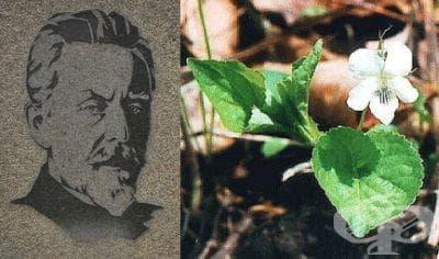 Открития на Сергей Навашин, свързани с процеса на оплождане при покритосеменните растения - изображение
