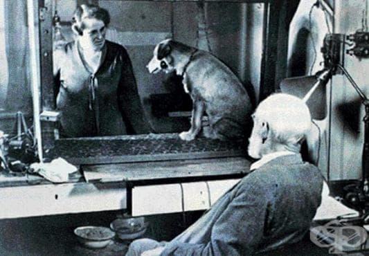 Критика срещу Иван Павлов и научните му опити, включващи вивисекция - изображение