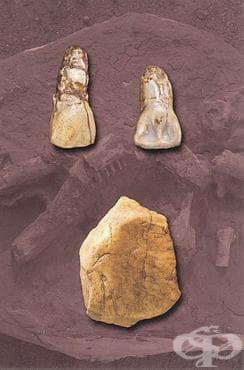 Лантианският човек като част от човешката еволюция - изображение