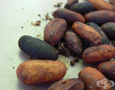 Лечебни употреби на какаото в древна Мезоамерика - изображение