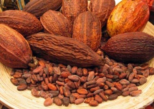 Медицински ползи на какаото, наблюдавани от испанските специалисти от 16-ти век  - изображение