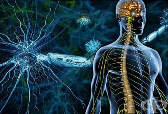 Методи за диагностициране на множествената склероза и първо клинично изследване на болестта от 20-ти век  - изображение