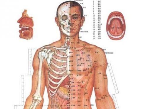 Модел на тялото според традиционната китайска медицина - изображение