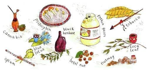 Наркотични растения, ползвани в древните култури - изображение
