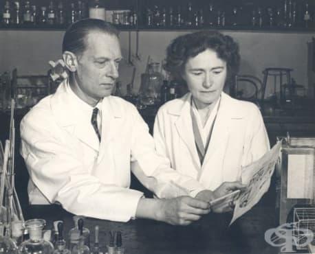 Научни постижения на Карл и Гърти Кори в САЩ през първата половина на 20-ти век - изображение