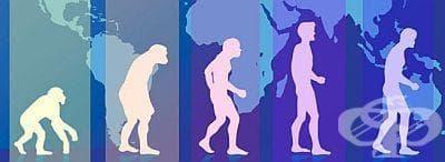 Общи бележки за теориите на Дарвин - изображение