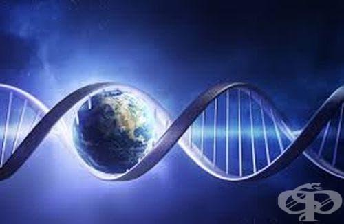 Очаквания от генното инженерство - изображение