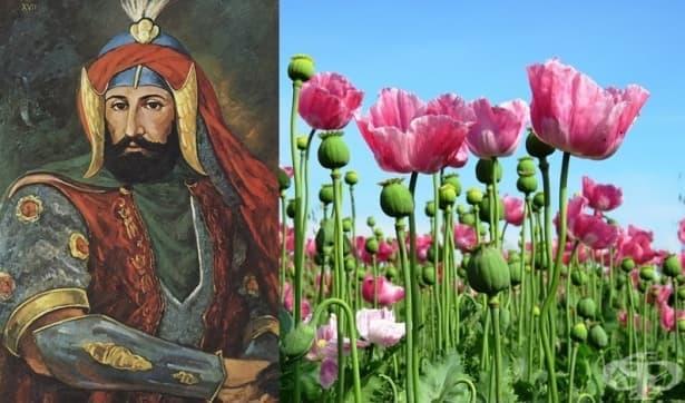 Упойващите вещества в ислямския свят – част 2 - изображение