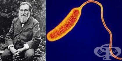 Опити и изводи на Иля Мечников при изучаване на холерните вибриони - изображение
