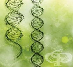 Опити за разгадаване състава на гена - изображение