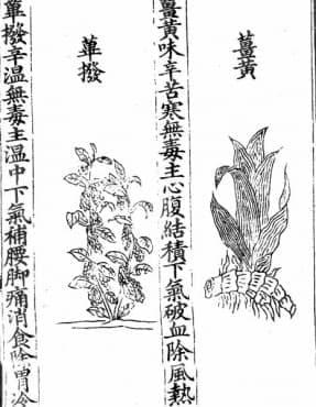 Още писмени сведения, свързани с лечебната сила на куркумата от средата на 20-ти век  - изображение