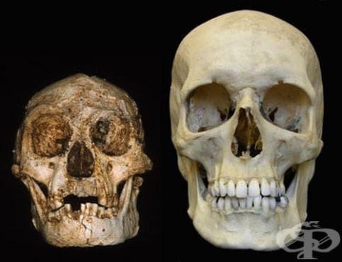 Откритие на първите останки от Хомо флоренсис - изображение