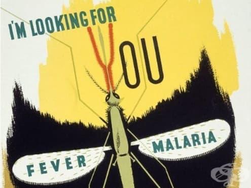 Откриване на преносителя на маларийния паразит  - изображение