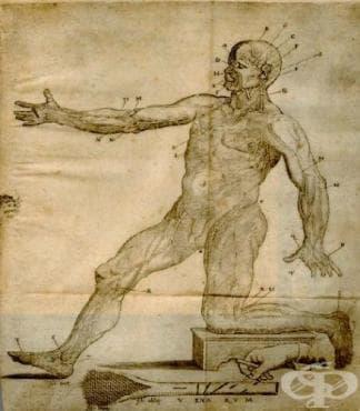 Поява на първия пружинен ланцет за кръвопускане - изображение
