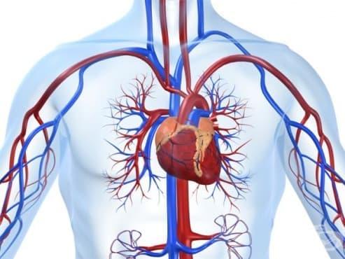 Предпоставки, свързани с формирането на кардиологията   - изображение