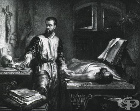 Принципи на Везалий за възраждането на съвременната анатомия чрез похватите на класическата наука за строежа на човешкото тяло - изображение