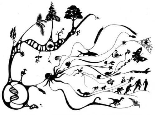 Принос на биогеографията и еволюционната теория към историята на биологията - изображение