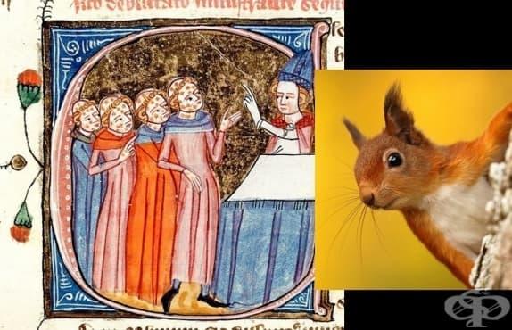 Как през Средновековието катеричките пренасят проказата в Англия  - изображение