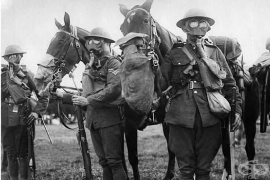 Първата световна война: американската полева медицина - изображение