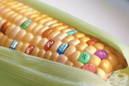 Първи резултати от генното инженерство - изображение