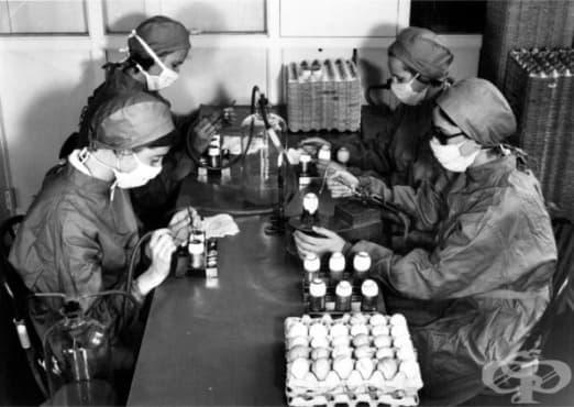 Първи опити за разработване на противогрипна ваксина - изображение