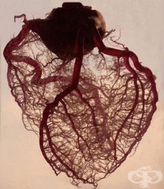 Ранен клиничен период на сърдечните трансплантации. Втора част - изображение