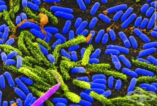 Ранни източници, разказващи за историята на холерата - изображение