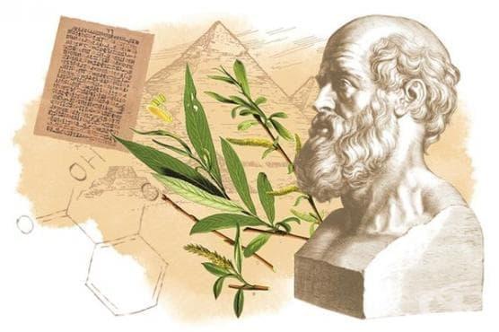 Растителни заместители на аспирина в древния свят - изображение
