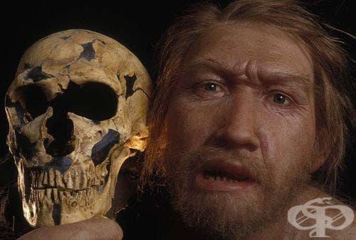 Разчитане на неандерталска ДНК - изображение