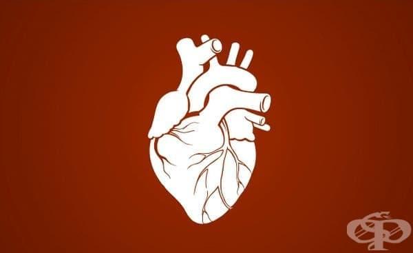 Развитие на кардиологията до 1960 година  - изображение