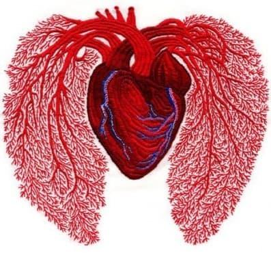 Развитие на кардиологията през 70-те години на XIX век - изображение