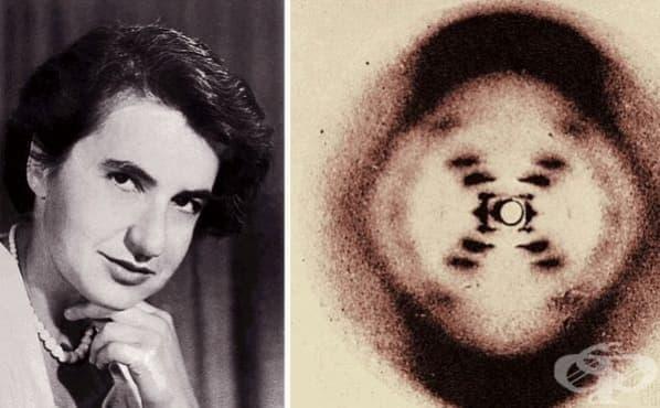 Розалинд Франклин и приносът й за развитието на молекулярната биология през 50-те години на 20-ти век  - изображение