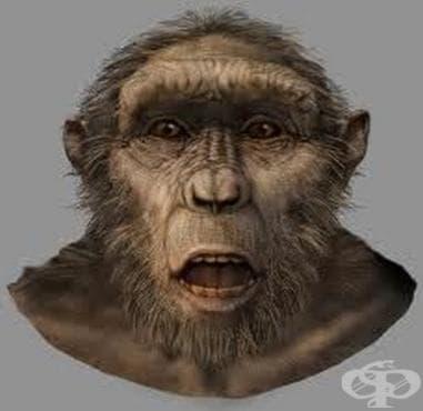 Сахелантропус чаденсис: най-старият човешки предшественик - изображение