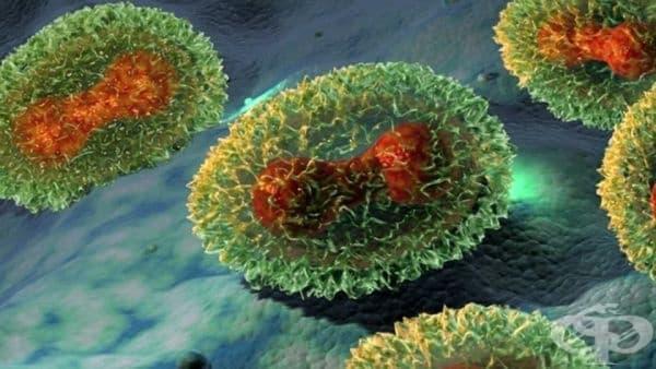 Скандал от 2014 година, касаещ открити проби с вариола и опасни вируси в САЩ - изображение