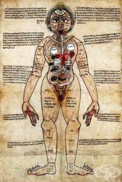 Схващания за сърдечносъдовата система, поместени в аюрведичeски текстове от 4-ти век пр. Хр.  - изображение