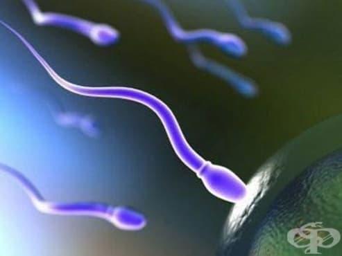Схващания за произхода на сперматореята и методи за лечението й от 19-ти век  - изображение