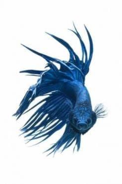 Синдром на рибната миризма, причинен от претоварване с прекурсори - изображение