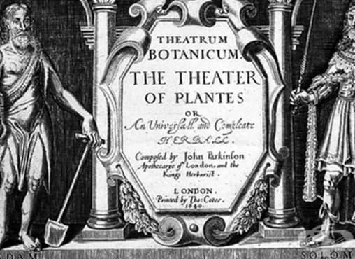 Билкови методи за лечение на болки в гърлото и дрезгавост на гласа от 17-ти век в Англия - изображение