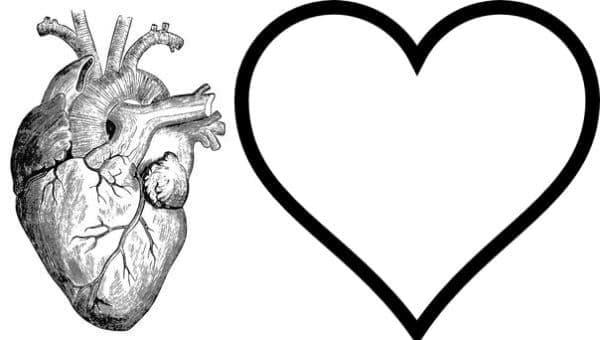Произход на сърцето като форма и символ според медицинската история - изображение