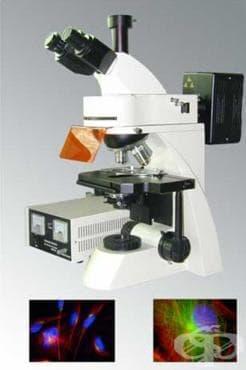 Създаване на флуоресцентен микроскоп, епи-флуоресцентен микроскоп и диоптрично огледало - изображение