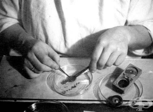 Създаване на първата ваксина срещу петнист тиф - изображение