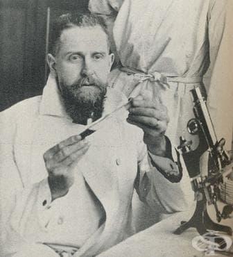 Създаване на ваксината срещу дифтерия през 1924-та  - изображение