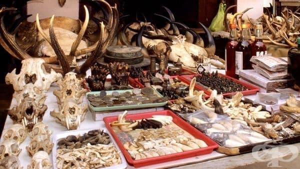 Традиционни народни лекарства с животински произход без особена терапевтична стойност, част 1  - изображение