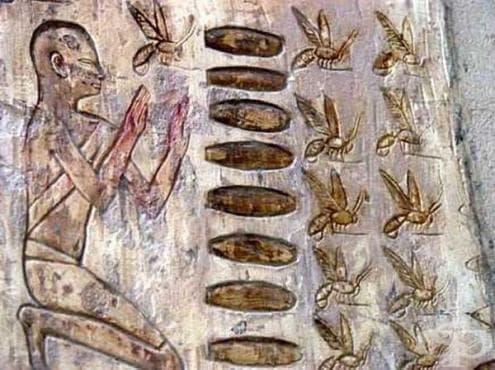 Употреба на прополис в Египет около 3100 г пр. Хр. - изображение