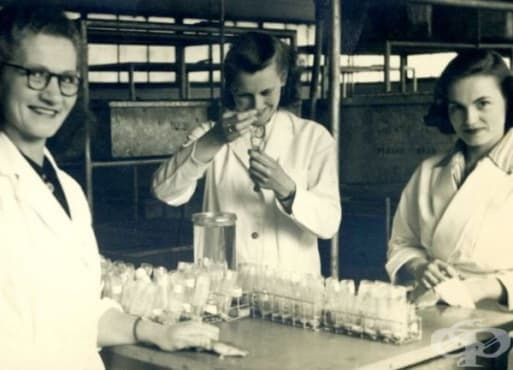 Употреба на теста  Хогбен за установяване на бременност в Англия през 50-те години на миналия век - изображение