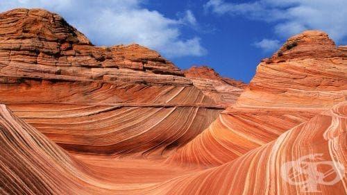 Влияние на геологията и палеонтологията върху историята на биологията - изображение