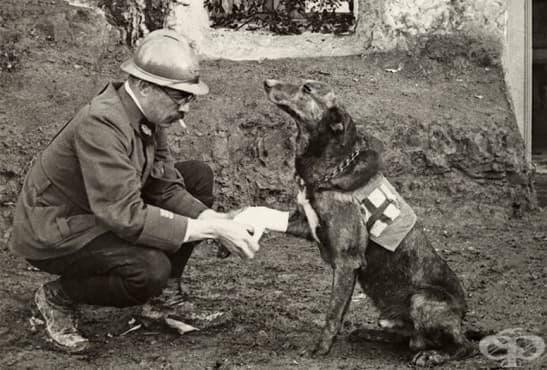 Медицинските кучета спасители, които помагат на ранените по време на Първата световна война - изображение