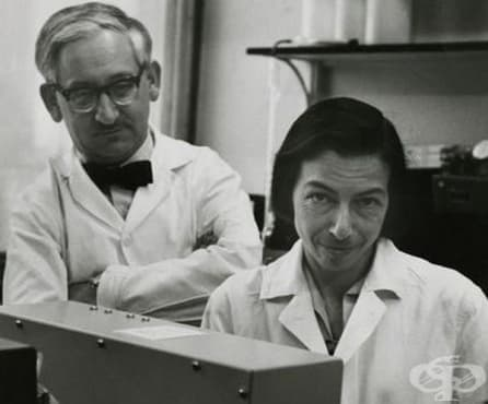 Заедно в живота и в науката: Райнхолд и Рут Ерика Бенеш и проучванията им, свързани с хемоглобина  - изображение