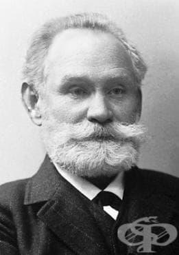 Защо Иван Павлов избира кучета, за да провежда опитите си от 1894 до 1897 година? - изображение