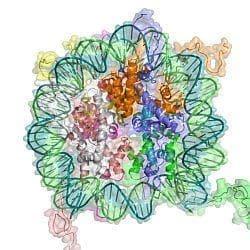 Естественият отбор като фактор в еволюцията - изображение
